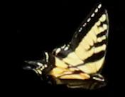 30 butterflies